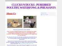 http://www.clucksnducks.webs.com