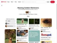 https://www.pinterest.com/haahrp/raising-golden-retrievers/