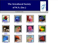http://www.aviculturalsocietywa.com/