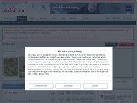 http://www.birdforum.net/