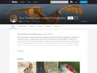 https://www.flickr.com/people/focused-on-birds/