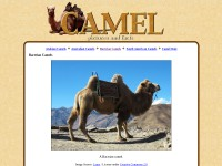 http://fohn.net/camel-pictures-facts/bactrian-camels.html