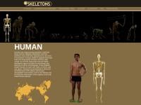 http://www.eskeletons.org