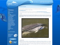http://www.speakdolphin.com/ground.cfm