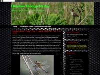 http://bamberbridgebirder.blogspot.com/