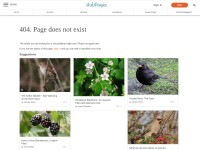 http://dal.hubpages.com/hub/Brambling-birds-of-Europe