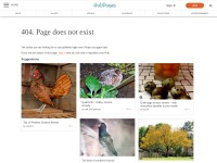 http://dal.hubpages.com/hub/Quail-Birds-of-Europe