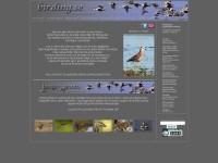 http://www.birding.se/