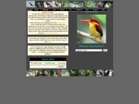 http://www.birdinginmalaysia.com/index.php