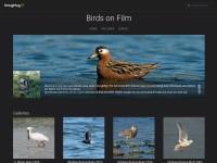 http://www.birdsonfilm.com/