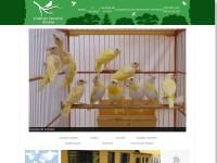http://www.criadourocomercialbocaina.com.br