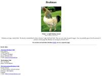 http://www.feathersite.com/Poultry/CGA/Brahma/BRKBrahma.html