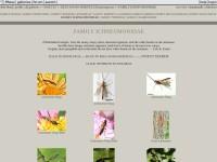 http://www.pbase.com/rcm1840/familyichneumonidae