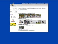 http://www.tarsiger.com/home/index.php?lang=eng